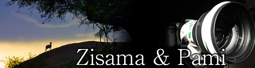 Zisama & Pami | 動物や風景などの写真を気の向くままに掲載するブログ
